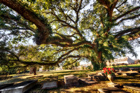 Live Oak, Sunset Historical Cemetery, Camilla, Georgia