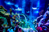 Sea Life Aquarium, Tempe, Arizona